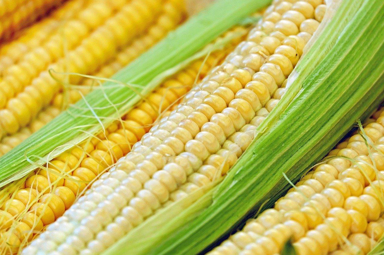 Zuckermais (Konserve), aufgewärmt (ohne Zugabe von Salz) Essen und Trinken Gemüsesorten