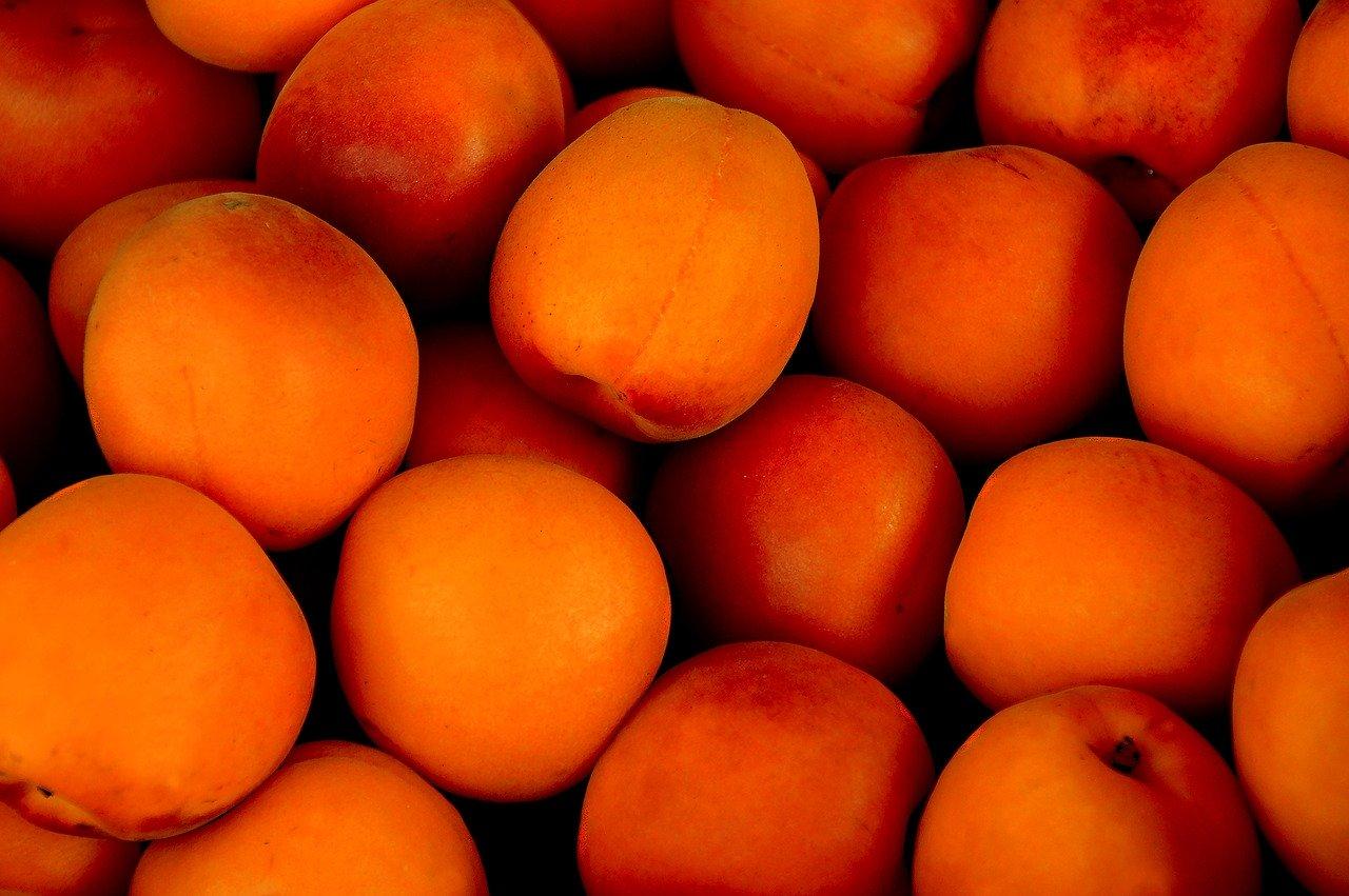 Aprikosenkuchen, gebacken (mit Blätterteig) Essen und Trinken Süßigkeiten