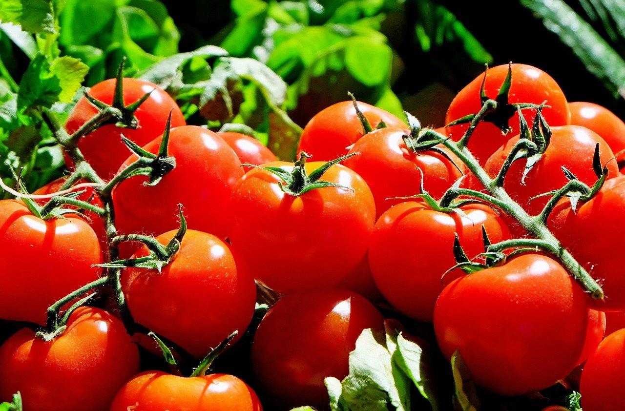 Tomatensauce Essen und Trinken Saucen, Zutaten und Gewürze
