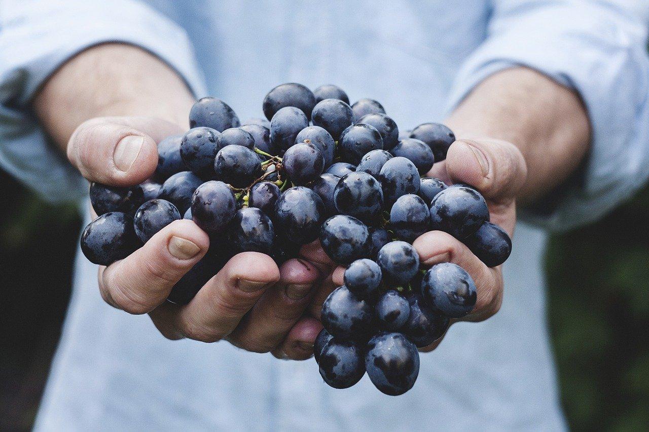Traube Essen und Trinken Früchte