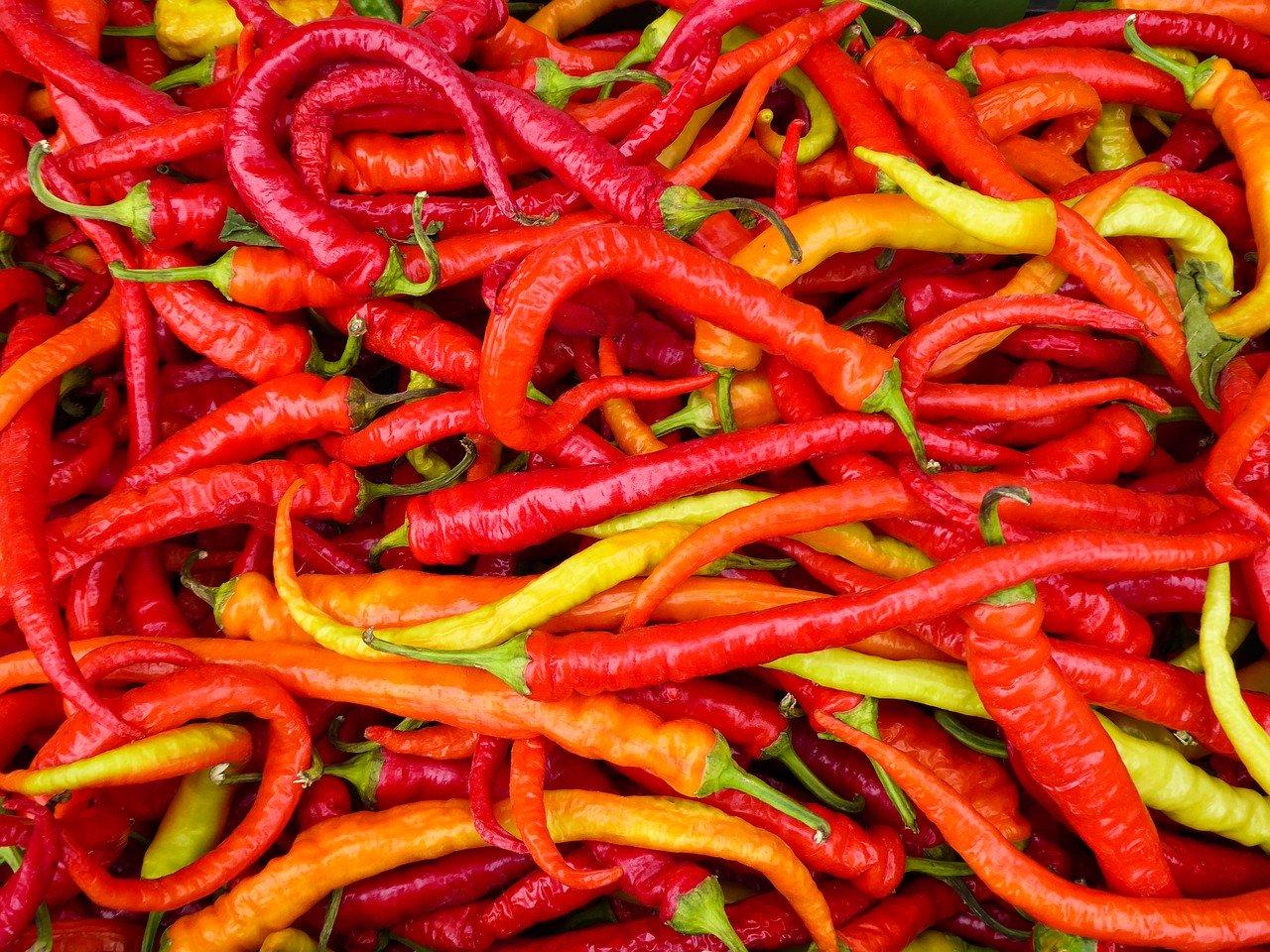 Peperoni, rot Essen und Trinken Gemüsesorten